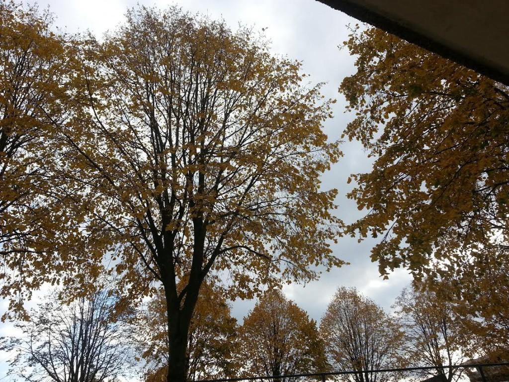 herfst`1